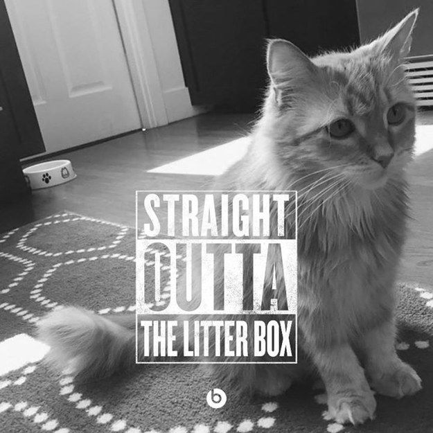 "Nor your household pets. | People Are Creating Hilarious Memes Of ""Straight Outta Compton"" And It's Gone Way Too Far"