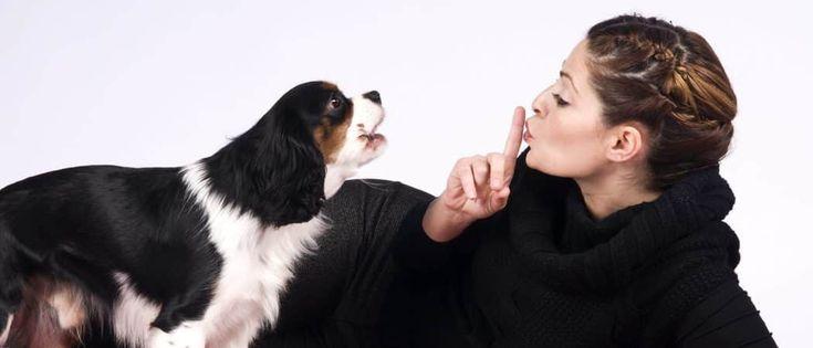 razas de perros pequeños que ladran poco
