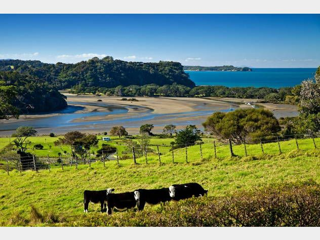 View over Waiwera area from home on Hibiscus Coast Highway. Love it! Cows, grass, beach, sand, river, trees, why we call New Zealand home!