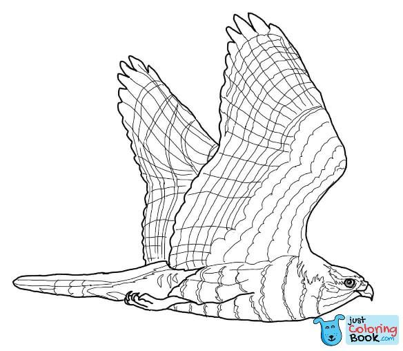 Goshawk Coloring Page Free Printable Coloring Pages Pertaining To