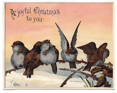 Vintage Christmas Graphic Image - Cute Birds on Branch - The Graphics Fairy