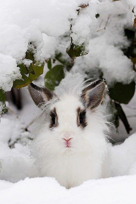467 Best Christmas Keys Images On Pinterest Xmas Bible