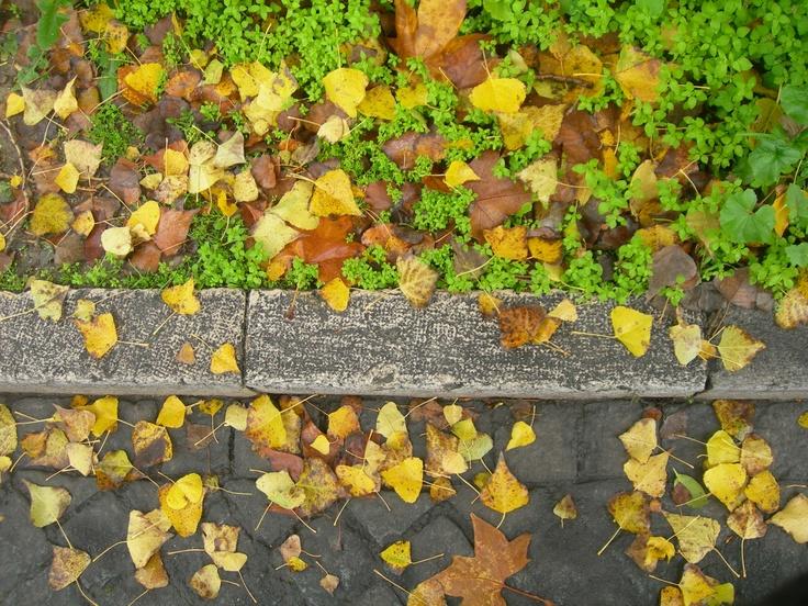 O chão enche-se de cores só deste tempo