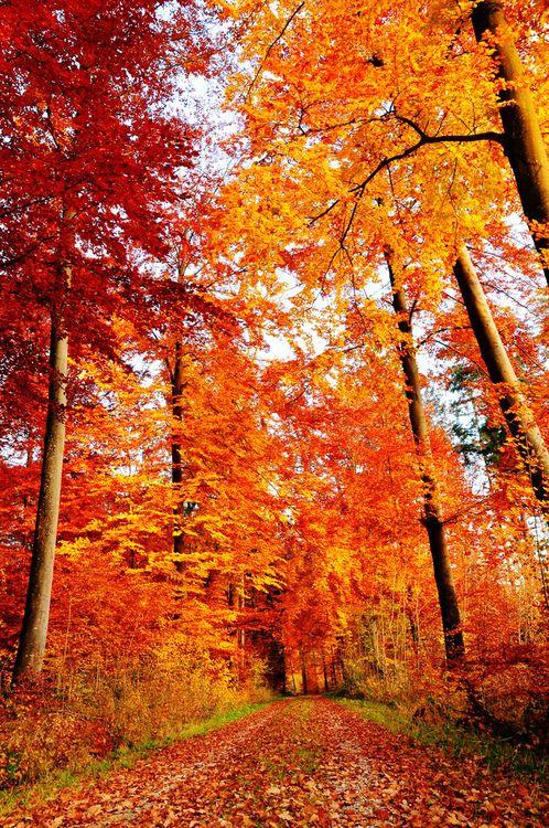 Autumn Road, Bavaria, Germany.