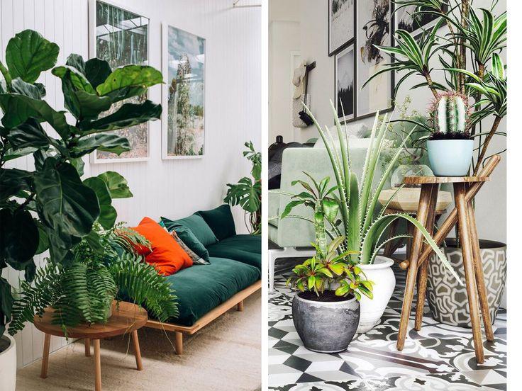 84 melhores imagens sobre varanda no pinterest madeira for Plantes vertes exterieur