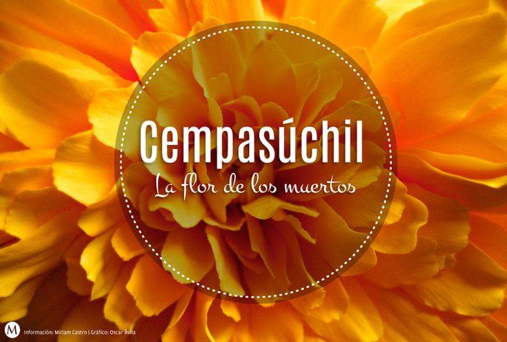 flor_de_muerto-cempasuchil-dia_de_muertos_MILIMA20151102_0302_3.jpg (976×659)