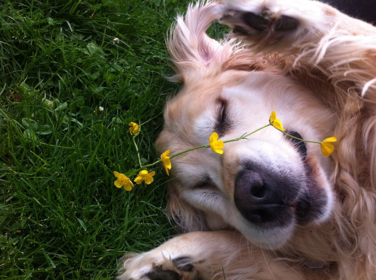 Best Flower Dogs Images On Pinterest Cats Love And Clothing - Meet gluta the smiling dog that beat cancer