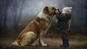 Papo Sincero: Prepare-se para ficar abalado quando descobrir o que seu cão pensa sobre você.