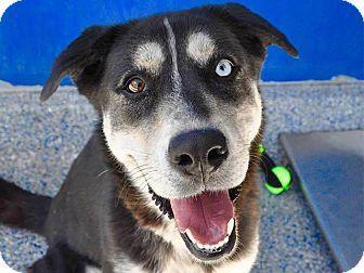 Long Beach, CA - Husky Mix. Meet Zucchini, a dog for adoption. http://www.adoptapet.com/pet/17026775-long-beach-california-husky-mix