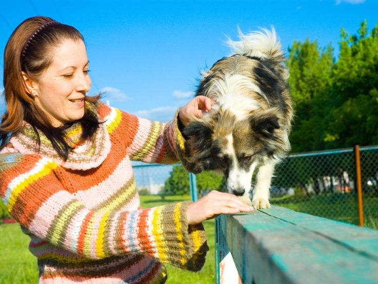 Give Your Canine Friend the Best Support When You Are Away  #dogmindingmelbourne #dogmindingCardigan