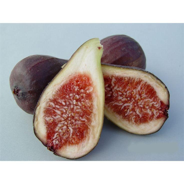 Plant Fig Brunoro Black  3L