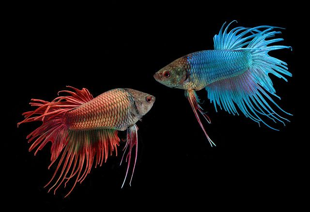 One Fish, Two Fish, Red Fish, Blue Fish | Flickr - Photo Sharing!