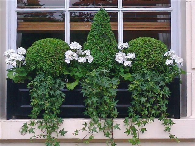 52 best images about Gardening Window Boxes on Pinterest