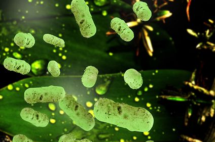 Gut Bacteria Can Teach Us About Cancer