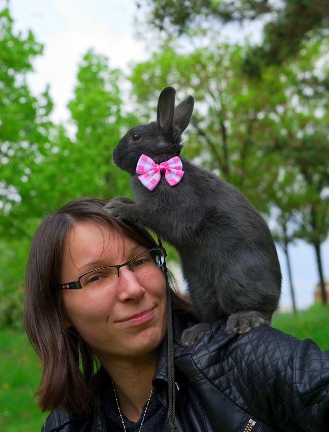 She's Bogyó (it means berry in hungarian) a coloured dwarf rabbit.  bunny, rabbit, dwarf