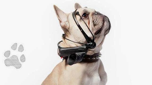 """Misterio y Ciencia Hoy: Un aparato """"traduce"""" los pensamientos de los perros en palabras"""