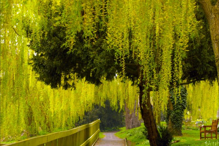 A personal favorite from my Etsy shop https://www.etsy.com/uk/listing/218487567/spring-willow-by-the-river-photograph