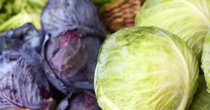 What Are the Health Benefits of Red Cabbage Vs. Green Cabbage? | LIVESTRONG.COM