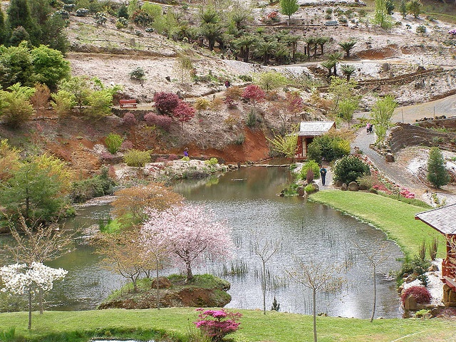 Rhododendron Gardens, Burnie, Tasmania