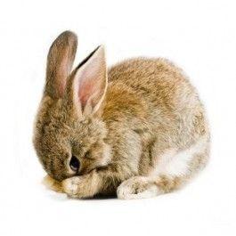 The Farm Family muursticker Baby Rabbit, Baby konijntje - Dieren