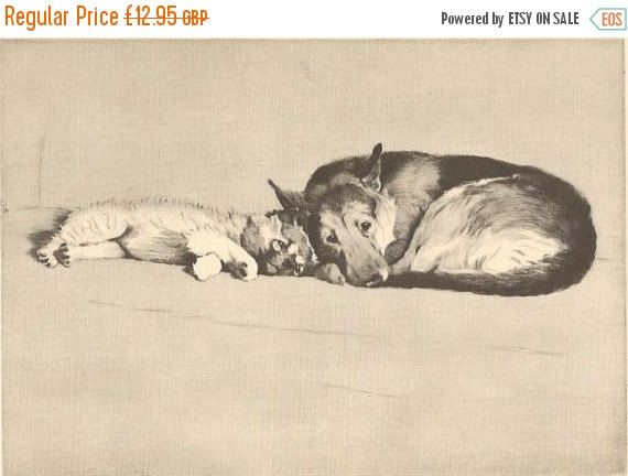 SALE CECIL ALDIN Print. The Alsatian. Vintage Print. Vintage Bookplate. Dog Print.