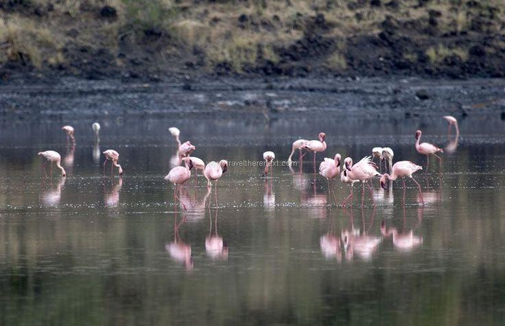 Great Rift Valley Kenya - Flamingos at Lake Natron  #africa #greatriftvalley #kenya #wilderness #shompole #accommodation #hotel #experience #wildlife #travel #traveltherenext