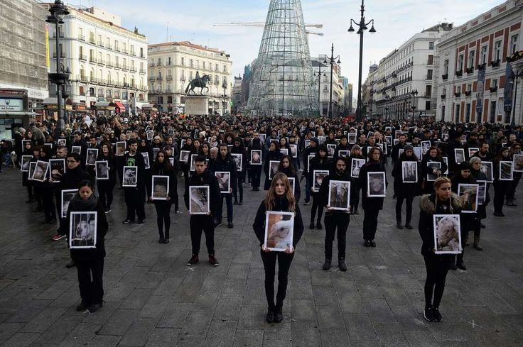 Organized each year by international animal-rights organization Igualdad Animal (Animal Equality), protest event with more than 400 activists and supporters of animal rights donned black and held photos of animals to draw attention to the suffering and deliberate killing of animals in Spain.