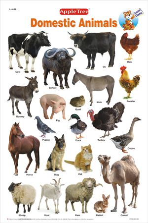 Educational Charts :: Classic Charts :: Domestic Animals Chart - WooBooks - Children Books at its Best!