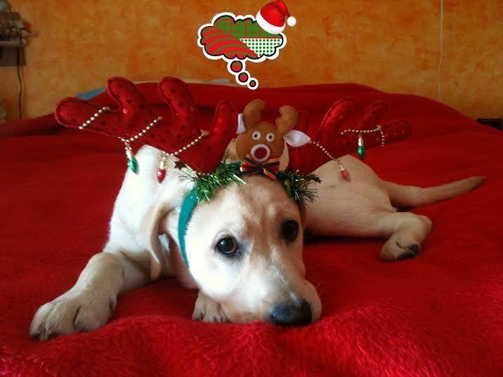 "iRemember... #Pets! ""Αργεί ακόμα ο Αϊ Βασίλης;"" Ποιος είπε ότι τα αγαπημένα μας κατοικίδια δεν καταλαβαίνουν από γιορτές; Δείξτε τους την αγάπη σας, βάλτε τους τα... γιορτινά τους και ανεβάστε τις πιο ξεκαρδιστικές φωτογραφίες των τετράποδων φίλων σας, στο www.iremember.gr!  #iRemember... Spread the #love to man's best friends!"