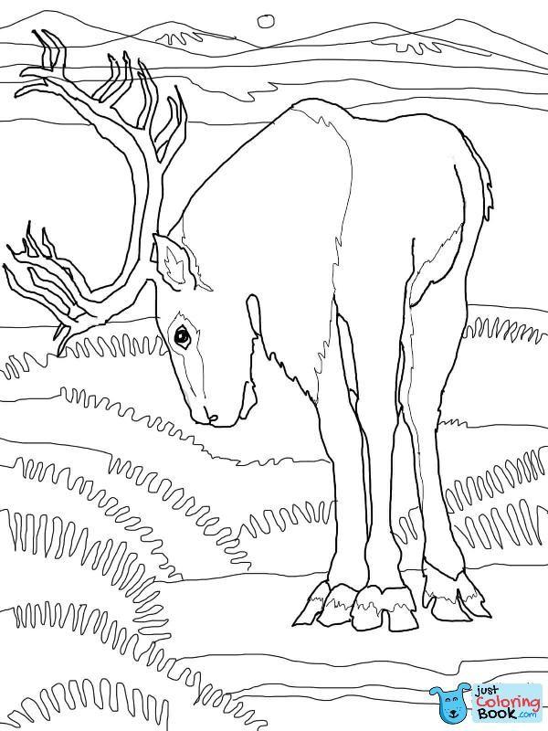 Caribou Deer Coloring Page Free Printable Coloring Pages Deer Coloring Pages Printable Coloring Pages Free Printable Coloring