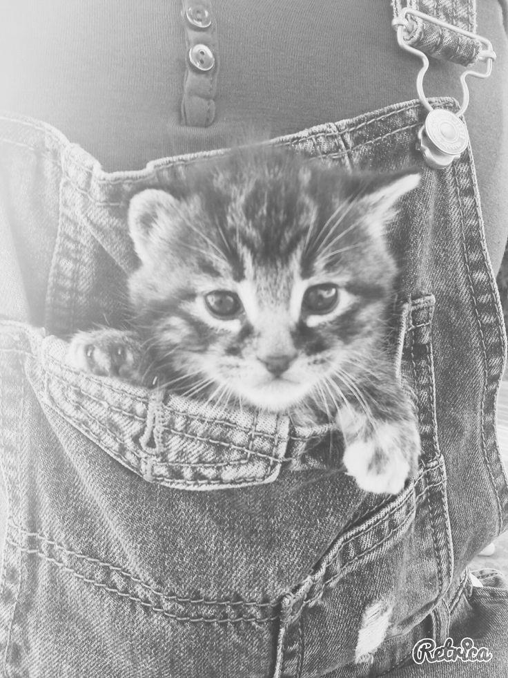 Chat dans salopette