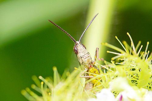 September 05, 2013 - Bug 006 Small