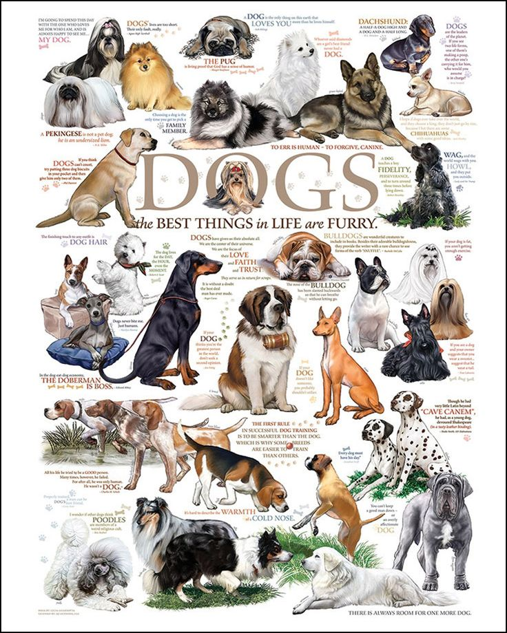 Dog Jigsaw Puzzles For Adults Love this puzzle! http://jigsawpuzzlesforadults.com/dog-jigsaw-puzzles-for-adults/