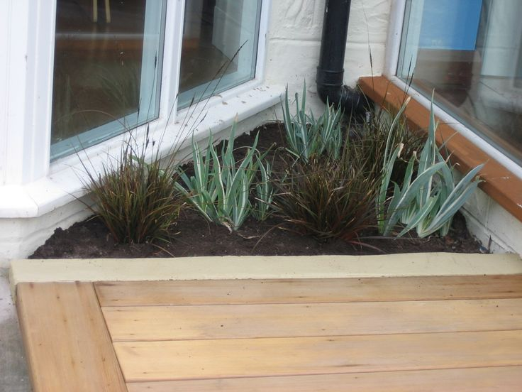 Grasses and irises filled this tiny triangular bed just visible from the kitchen and living room