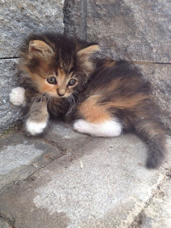 This kitty is just precious. Couldn't be any cuter.