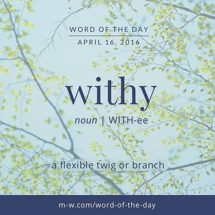 #WordOfTheDay Withy: Flexible twig or branch.