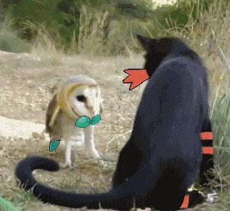 Una batalla pokemón.