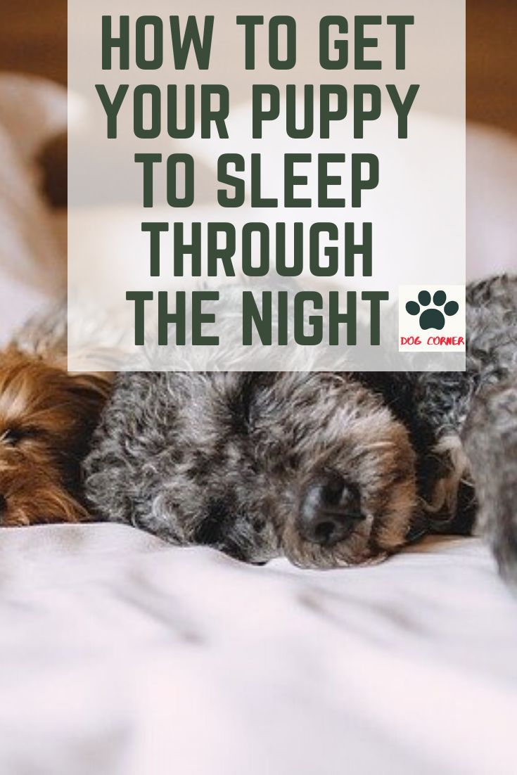 How To Get Your Puppy To Sleep Through The Night Crying Puppy At Night Puppies Dogs