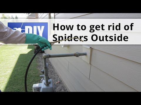 17 Best Images About Spiders On Pinterest Spider Webs
