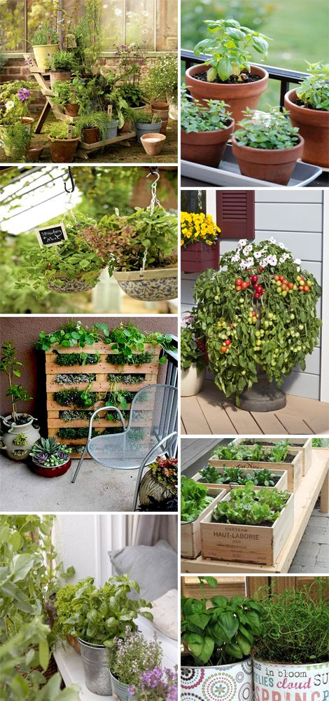 Oltre 25 fantastiche idee su giardinaggio urbano su - Porta piante aromatiche ...