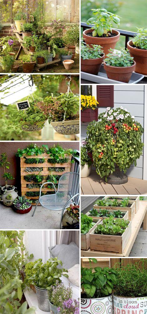 Orto terrazzo orto verticale piante aromatiche ortaggi - Erbe aromatiche in casa ...