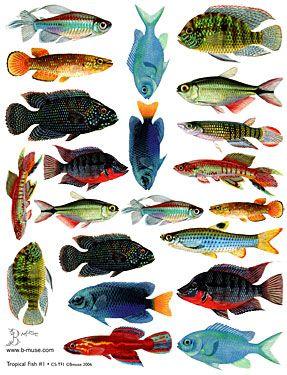 tropical fish - Google Search