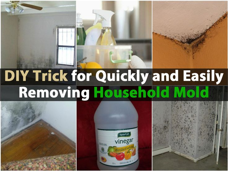 Mold is a problem in many homes and can cause a number of health issues. Many people experience breathing difficulties, respiratory infections and even more serious illnesses due to household mold. Fortunately, there is a way that you can get rid of that mold, provided you know where to find it...