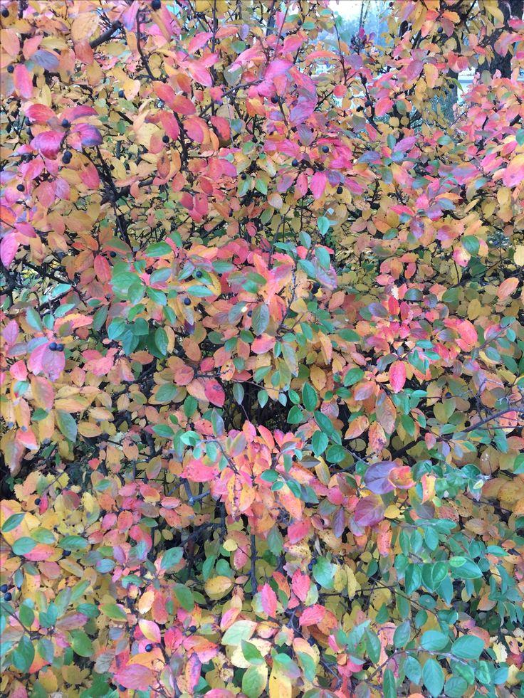 Leaves are like pink, red,green colour....... Looking niceeeeeeee🍃🍃🍃🍃
