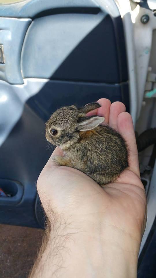 57 Teeny Tierbabys, die Sie lieben werden!   – toetiees