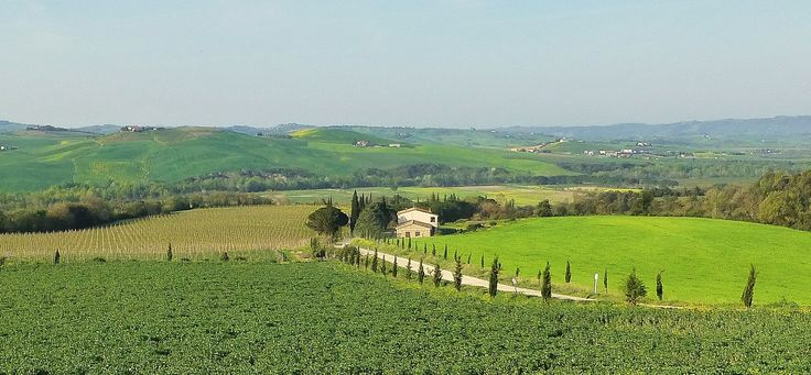 spring at last on the brunello di montalcino vineyard of gineprone at coldorcia