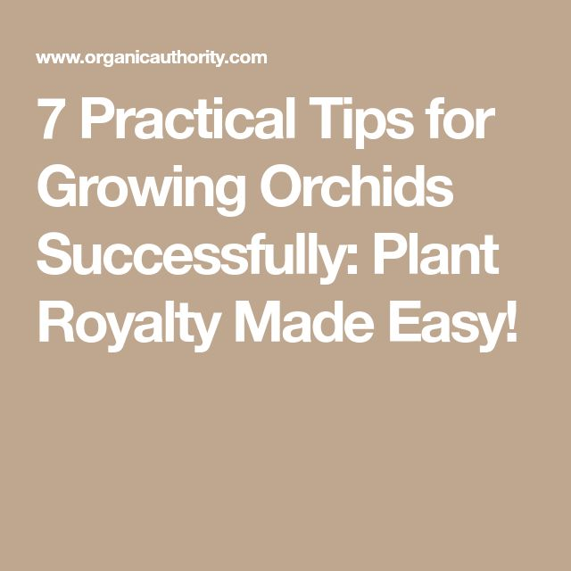 7 Practical Tips for Growing Orchids Successfully: Plant Royalty Made Easy!