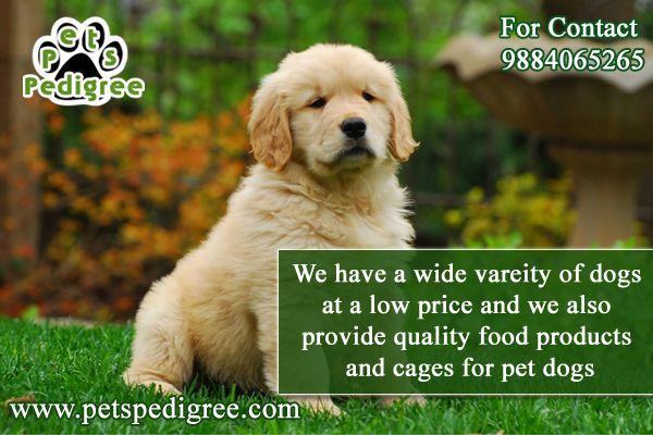 Best Pets Shop Petspedigree Chennai Pets Dogs Breeds Pet Puppy Pets