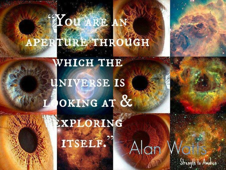 alan watts quotes | Alan Watts quote | words