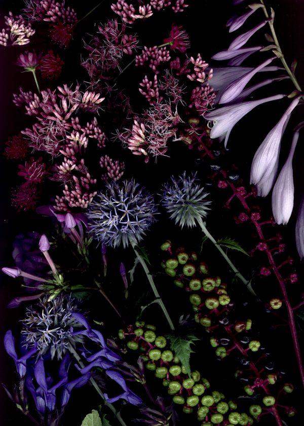 Craig Cramer's amazing august 2012 bloom day scans